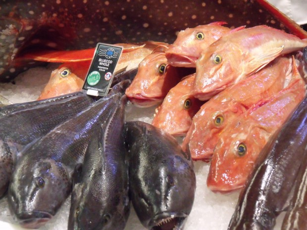 Image for Vegetarians won't change the fishing industry