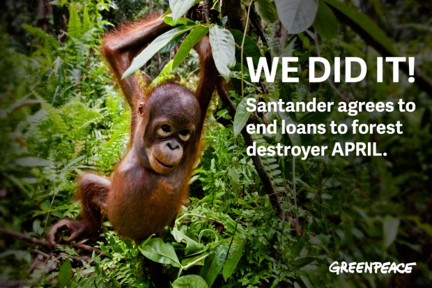 Image for Result: Santander stops financing forest destroyer APRIL