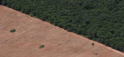 Amazon agriculture deforestation