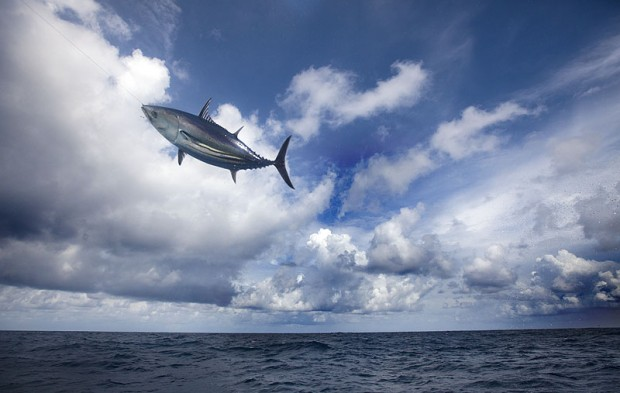 Image for Pole and line fishing – catching tuna one by one