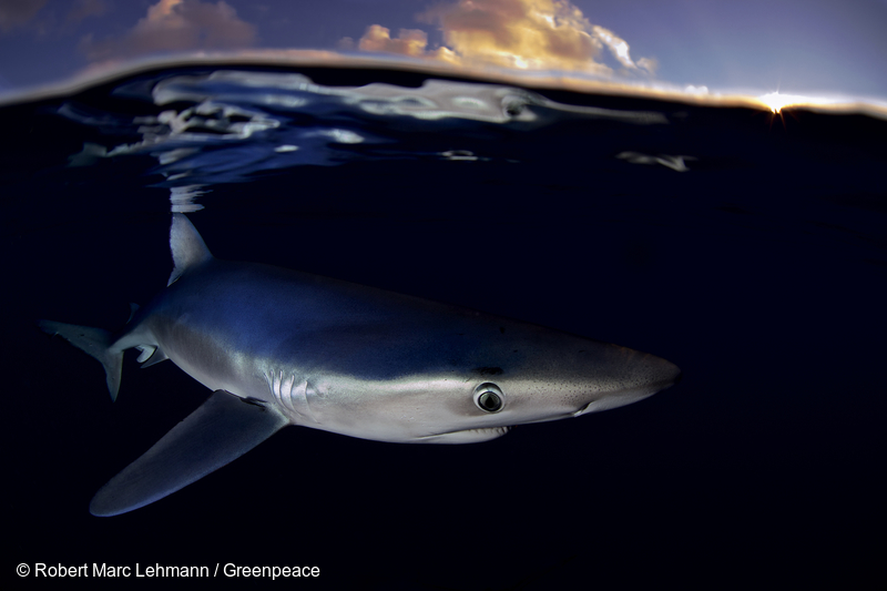 Image for 9 Things You Probably Didn't Know About Sharks