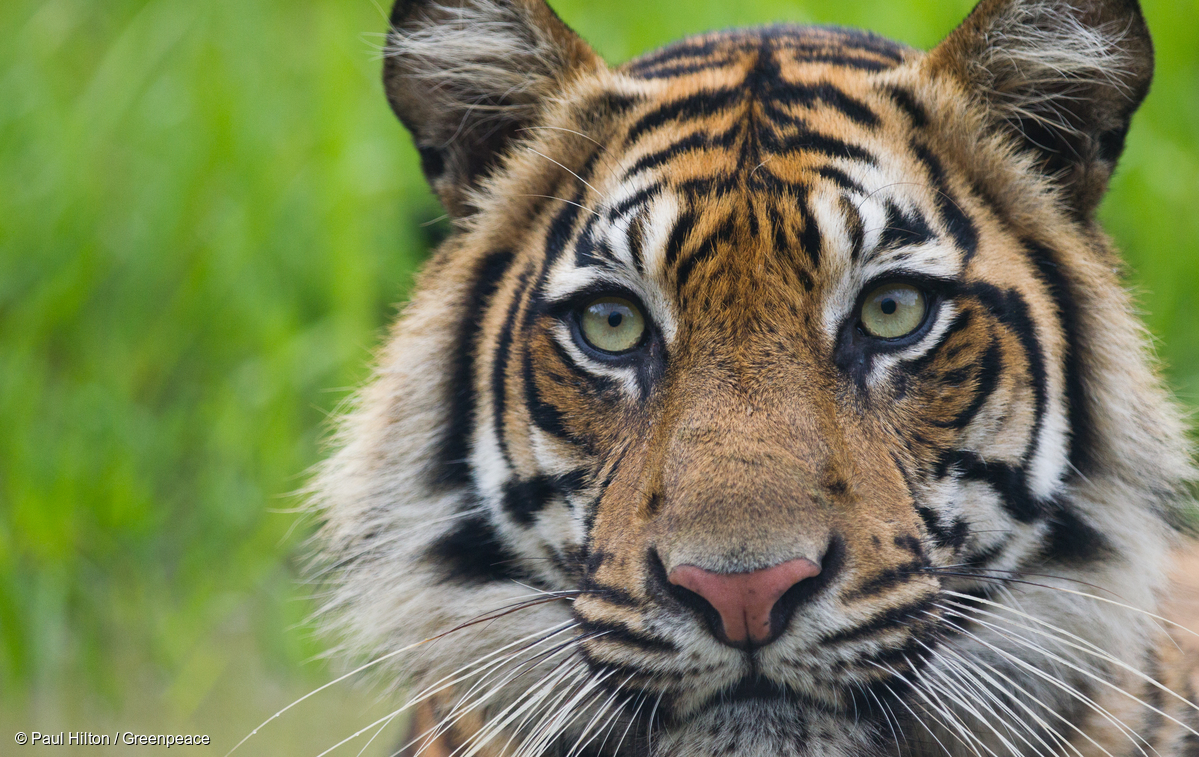 7th World Tiger Day celebrated in India