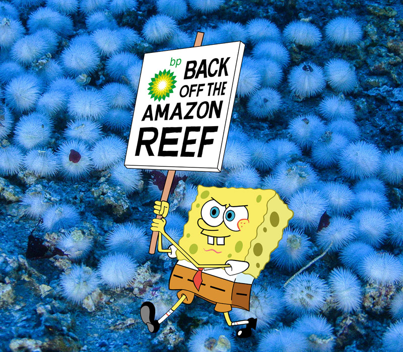 Image for Why SpongeBob is the perfect champion for the Amazon Reef