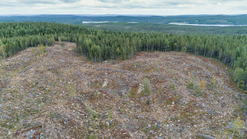 Image for Why Velvet's claim of protecting forests should be flushed away