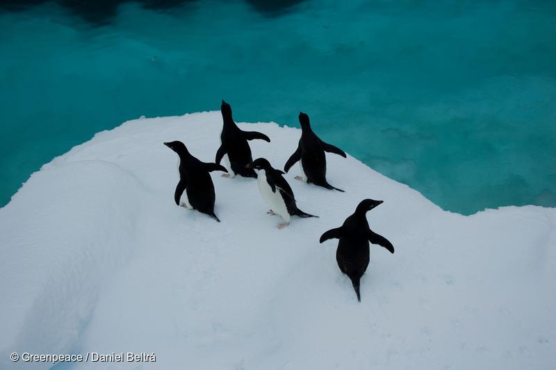 Image for Help create the largest protected area on Earth: an Antarctic Ocean Sanctuary