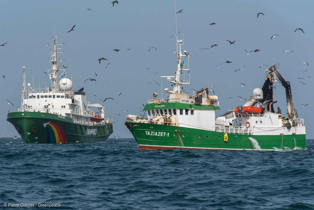 Image for In Pictures: Still plenty of fish in the West African Sea, Greenpeace investigates on World Fisheries Day