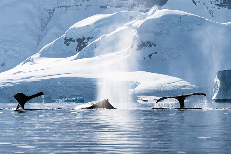 Image for Protect the Antarctic Ocean