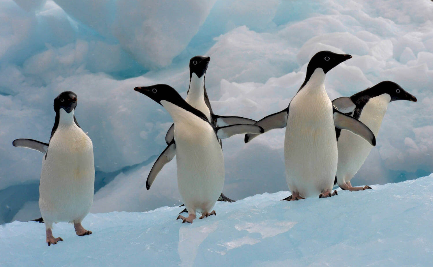 Image for We protected the land, now we must protect the ocean – Antarctica