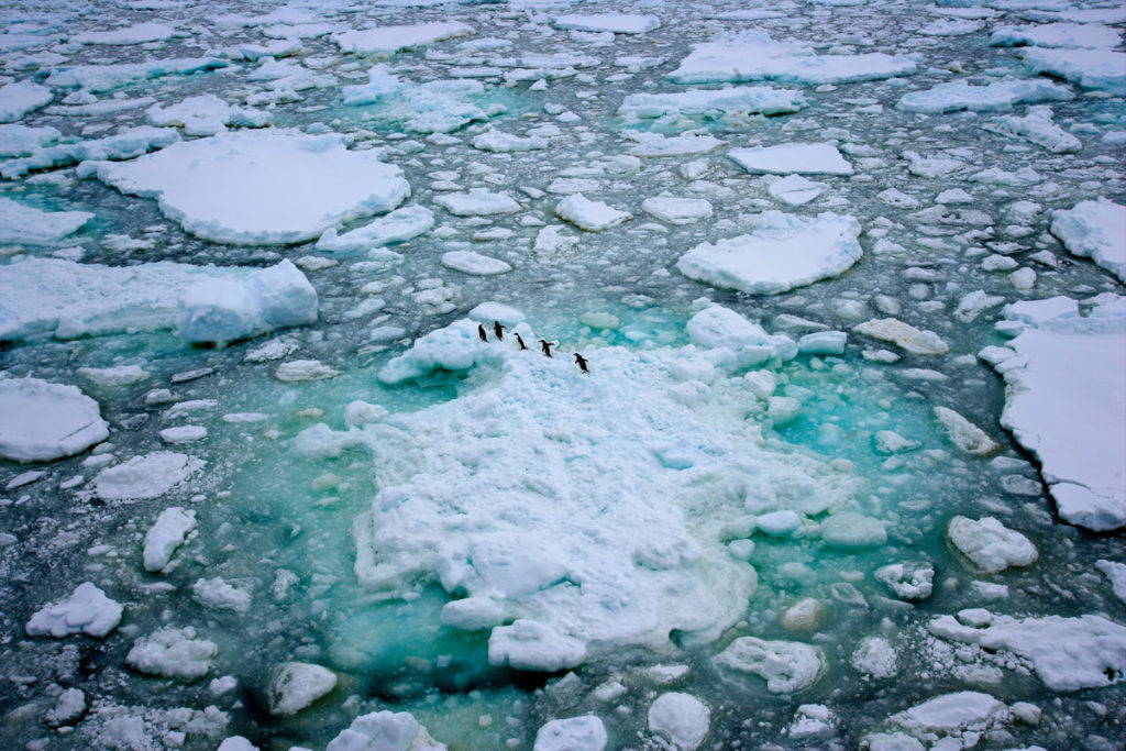 Adelie penguins in the Antarctic Ocean, 2008