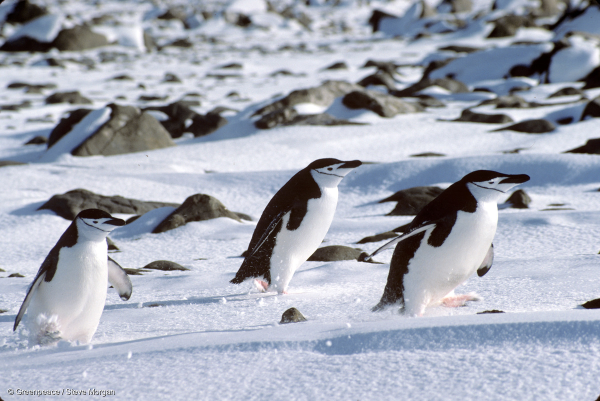 Image for 5 things you (probably) didn't know about the Antarctic