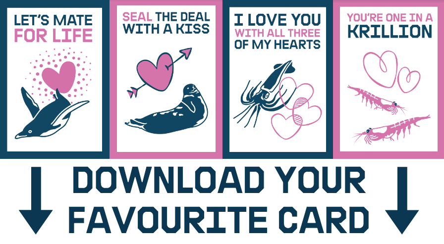 print your own valentine s day card greenpeace uk