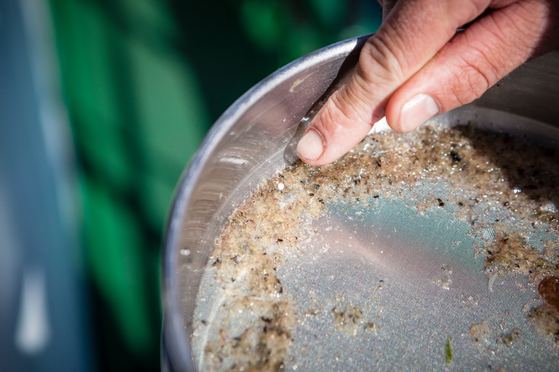Image for New Greenpeace Research Finds Microplastics in Scottish Seas
