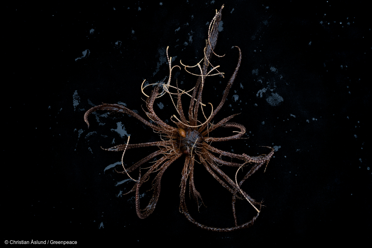 Image for Strange things lurk in the icy depths of the Antarctic Ocean