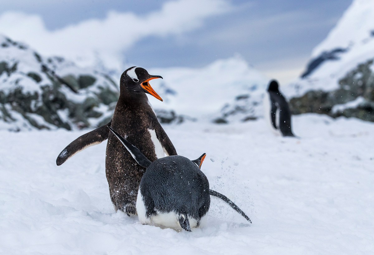 Image for Major Win! Krill industry backs Antarctic Ocean Sanctuaries