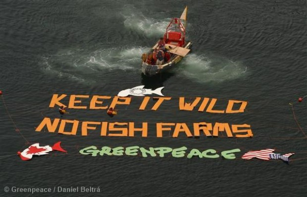 Image for Why Greenpeace can't – and won't – endorse farmed salmon