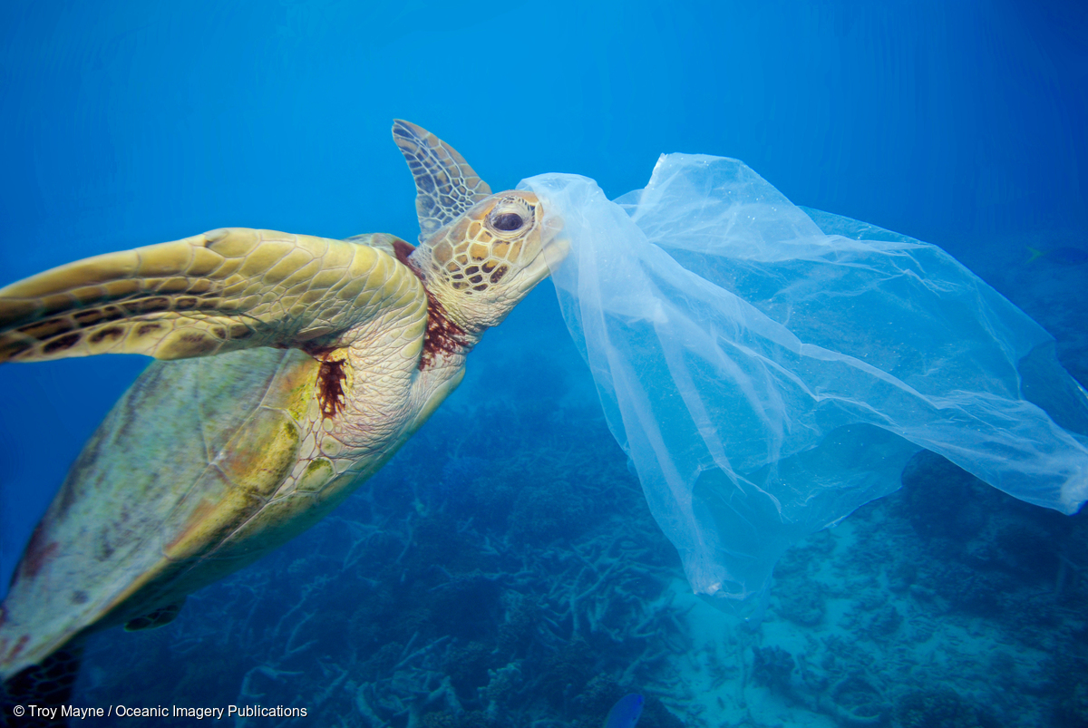 Image for In Pictures: Ending Plastic Pollution on Earth Day!