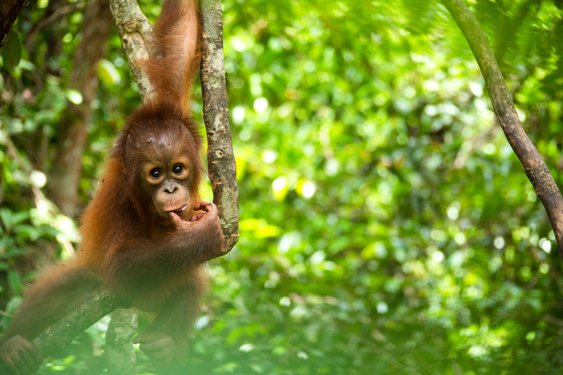 Image for Tourism vs palm oil in Borneo