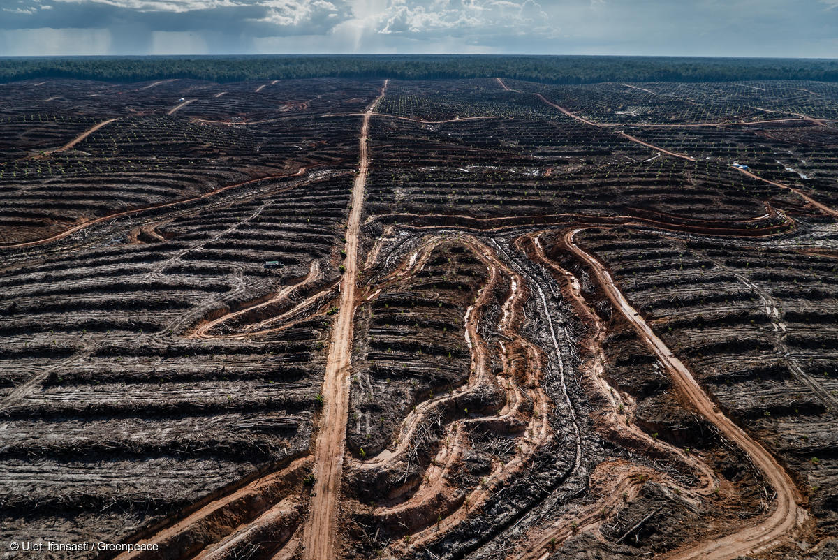 Image for In Pictures: Massive deforestation linked to major consumer brands
