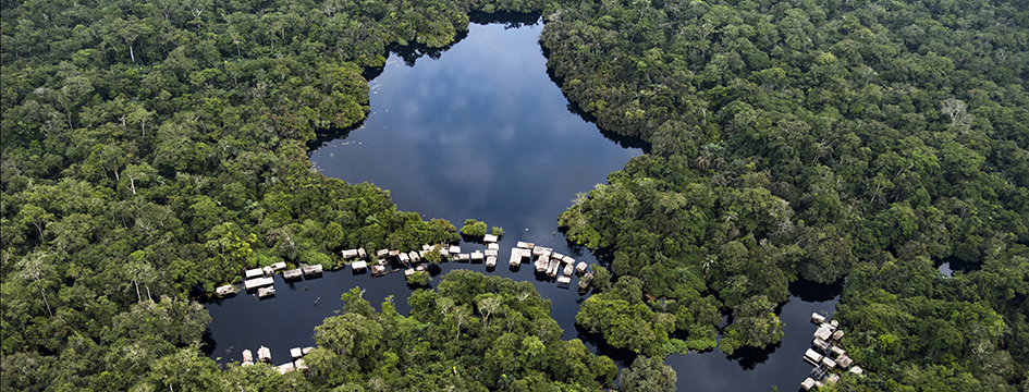 Image for The Congo rainforest of central Africa