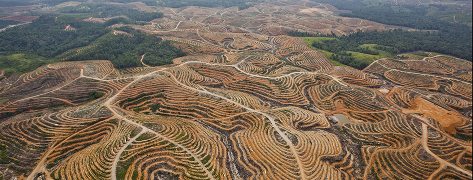 Image for What is palm oil?