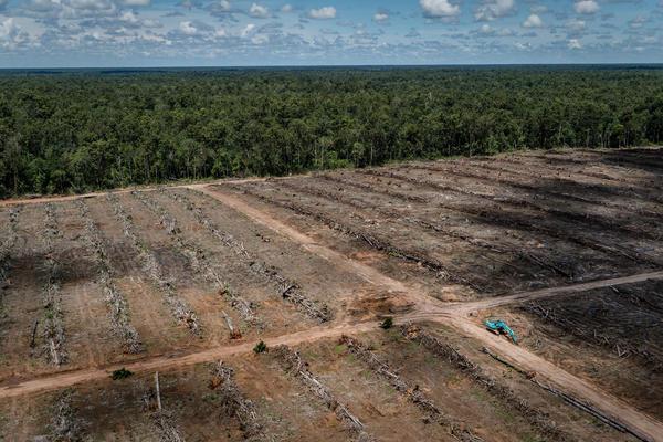 Uk Brands Will Fail Palm Oil Promise Greenpeace Uk