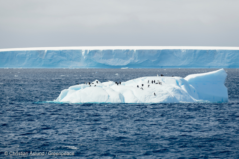 Image for Governments are deciding whether to create a huge Antarctic Ocean Sanctuary. Here's what you need to know.