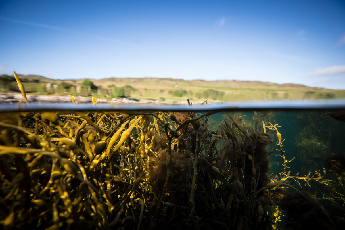 Image for Why it's a good idea to protect our underwater kelp forests