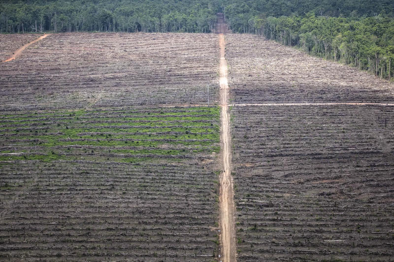 "An aerial photo shows new clearance for palm oil plantation on the secondary dry land forest at  concession PT Agrinusa Persada Mulia  of GAMA Group in Toray village, Merauke subdistrict, Merauke district, Papua province.  7°32'49.026"" S 140°47'56.141"" E, 12/2017 flyover - Nabire to Merauke, Southern Papua"