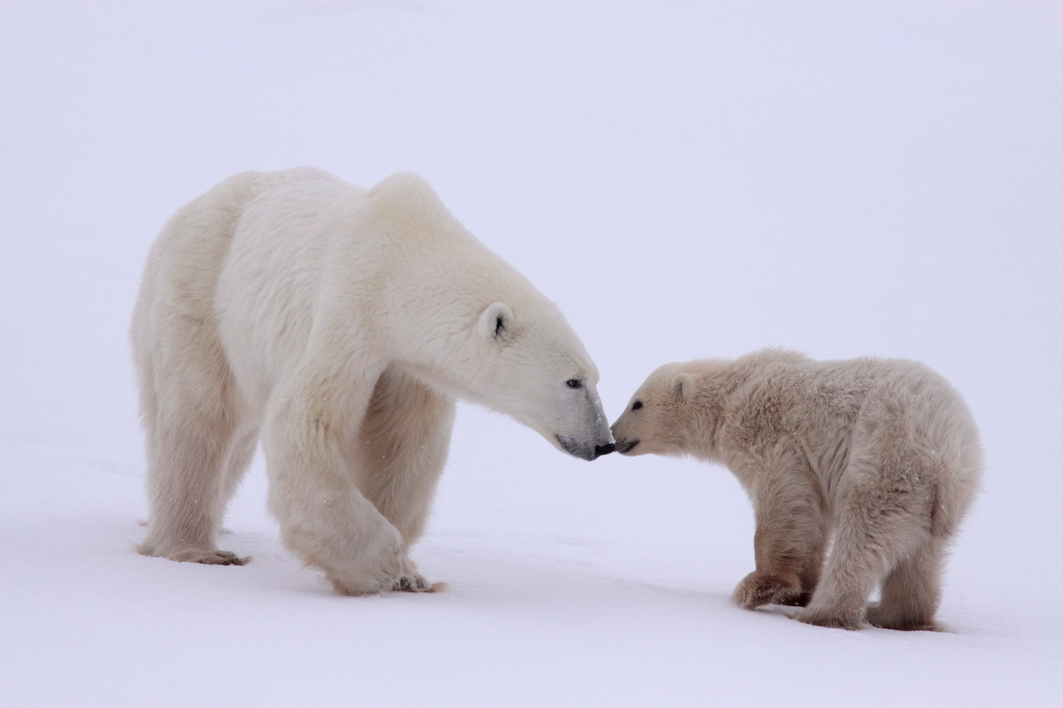 Image for In pictures: Happy International Polar Bear Day!