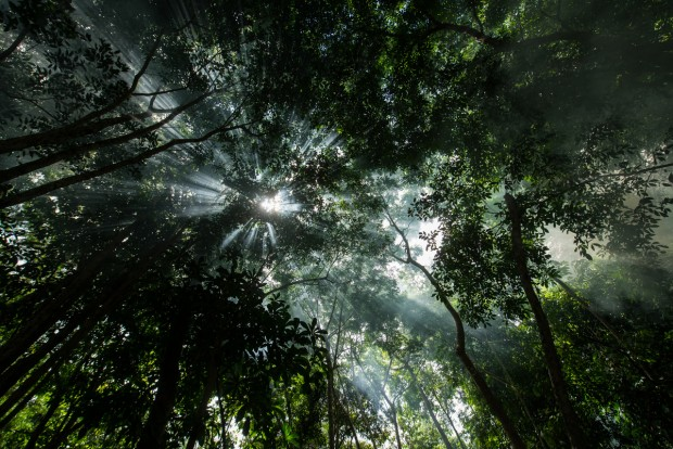 Amazon forest canope