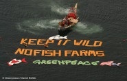 Greenpeace ship campaigning against fish farms
