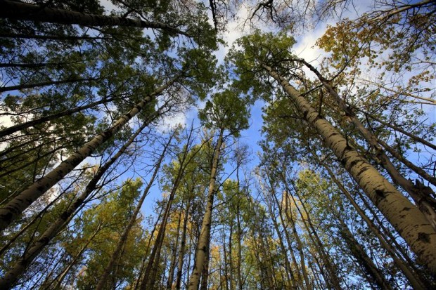 Forest Facts 9 Things You Need To Know Greenpeace Uk