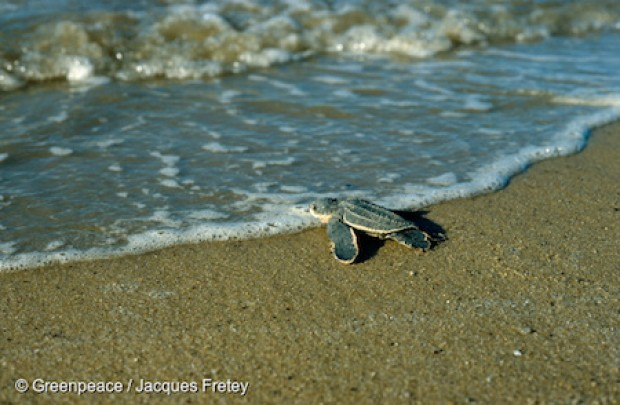 How Much Do You Really Know About Turtles Greenpeace Uk