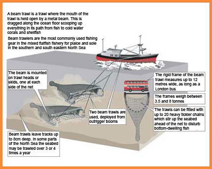 How beam trawling works