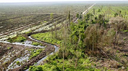 Forested peatlands cleared for oil palm plantations in Riau, Indonesia