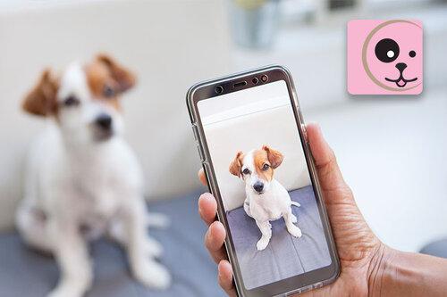 lindsay giguiere, novus innovo, felicitails, pet mobile application