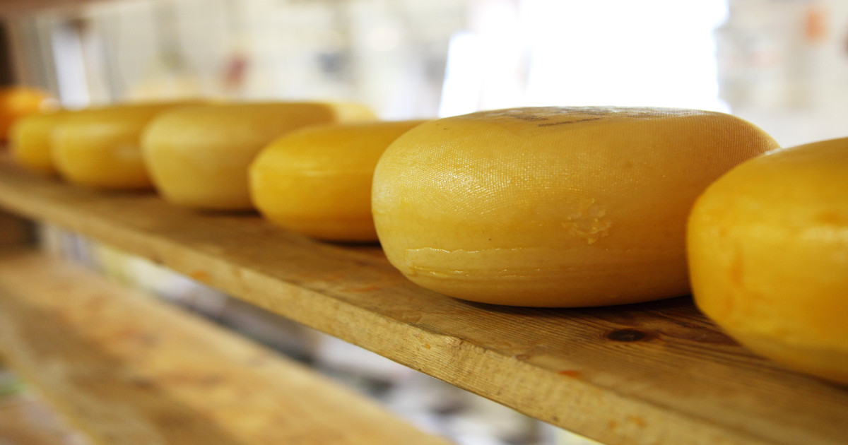 The Amazing Origins of Dutch Cheese