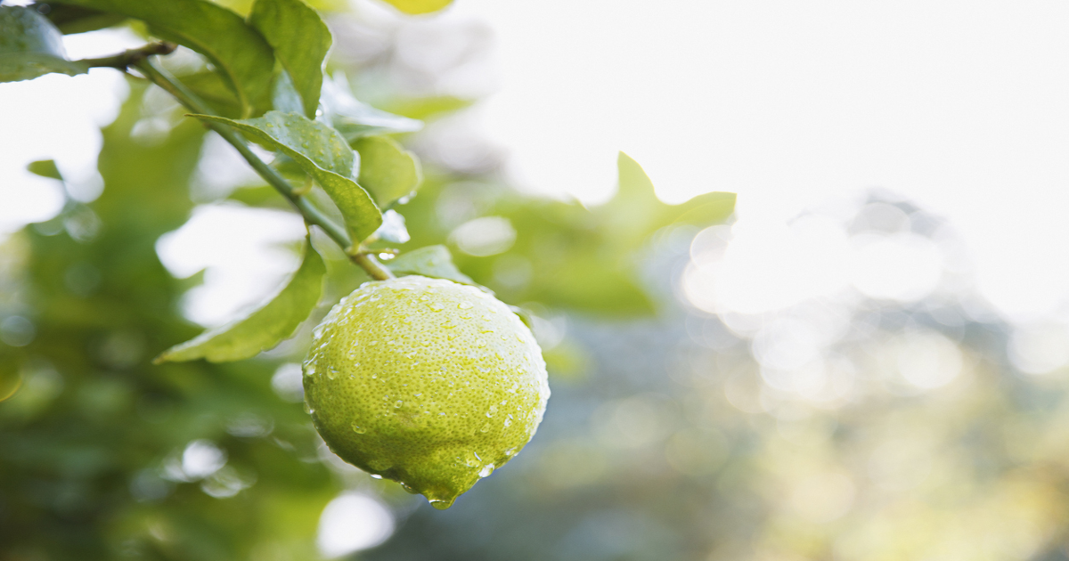 First Fruits: How Plants Become Products