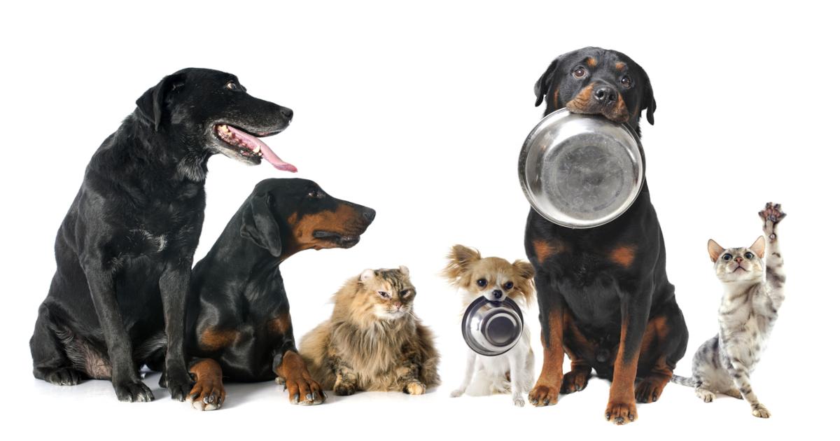 Pet Food Aesthetics
