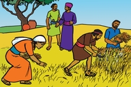 Ruthi Mumukunda Okwo Okesia (Picture 3. Ruth in The Harvest Field)