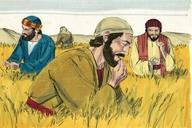 Saun Marcos 2:23 (Mark 2:23)