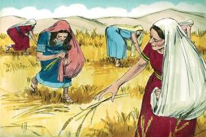 Ruth 2:1-23