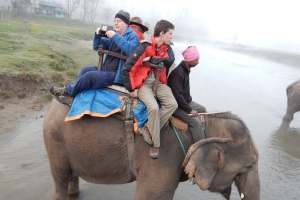 <p>Even travelling by elephant can be risky