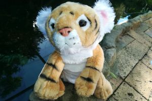 Talking Tigers for Toddlers Project
