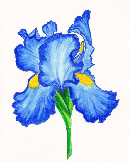 any occasion card blue iris