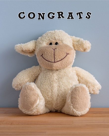 congratulations card baby lamb stuffed animal