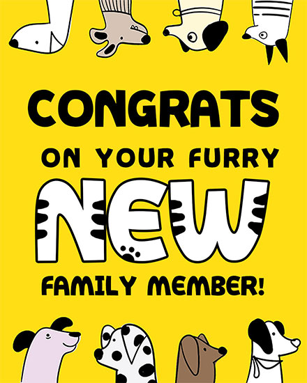 congratulations card congrats on your new furry family member