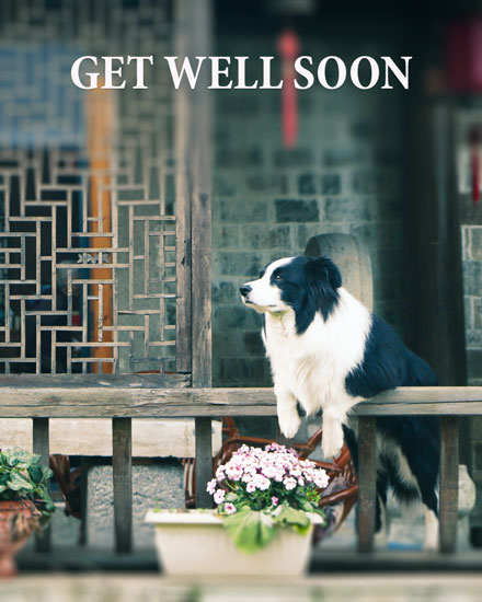 get well soon card dog waiting