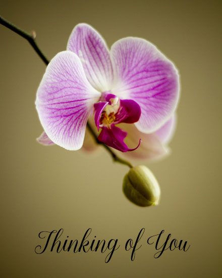 get well soon card orchid