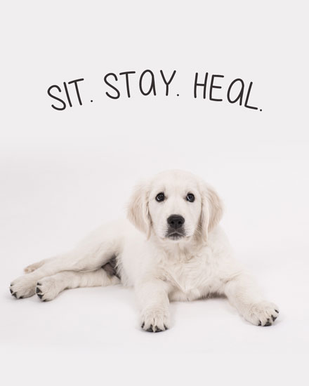 get well soon card sit stay heal dog